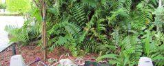 ¿Sabías que si les hablas a las plantas, ellas pueden responderte?