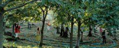 Mi maravillosa estancia en el Bosque Sagrado