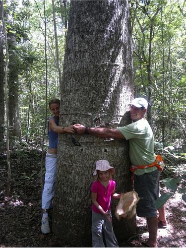 ¿Quieres orientar árboles?