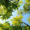 Los árboles, aliados y amigos