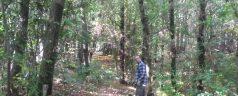 Recogiendo castañas en el Templo del Bosque Sagrado