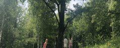 El árbol como tótem