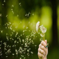 La primavera de la vida