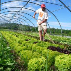 Autosuficiencia alimentaria: ¿cómo era antes?