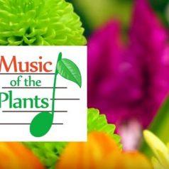 ¿Cómo funciona la música de las plantas?