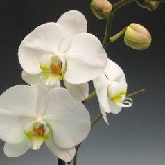 Jazz con una orquídea