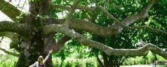 ¿Qué significa orientar árboles?