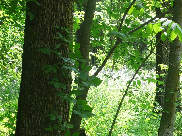 Lo que los árboles quieren